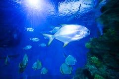 Beautiful colorful fish in an aquarium. Beautiful colorful fish in a national aquarium of Malta Stock Images