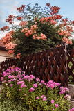 Beautiful colorful flower bush backyard Royalty Free Stock Photos