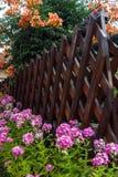 Beautiful colorful flower bush backyard Royalty Free Stock Images