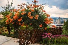 Beautiful colorful flower bush backyard urban background Stock Photos