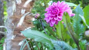 Beautiful colorful flower garden with various flowers. stock footage