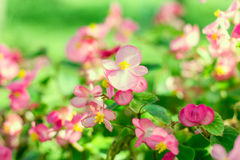 Beautiful colorful flower Royalty Free Stock Photos