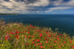 Beautiful colorful flowers in the background of the sea. Royalty Free Stock Photos