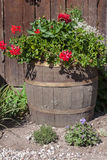 Beautiful colorful flowers on the barrel. Stock Image