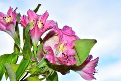 Beautiful colorful flowers close up in the sunshine royalty free stock photography