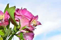 Beautiful colorful flowers close up in the sunshine stock photo