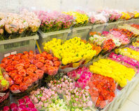 Beautiful colorful flowers in flower shop Royalty Free Stock Photography