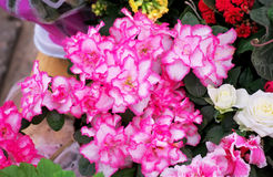 Beautiful colorful flowers. Stock Photography