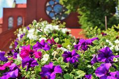Beautiful colorful flowers and red brick cathedral Royalty Free Stock Photos