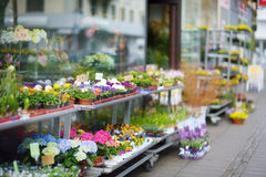 Beautiful colorful flowers sold on outdoor flower shop in Bremen Stock Images