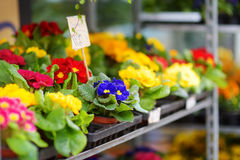 Beautiful colorful flowers sold in outdoor flower shop Stock Photos
