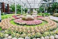 Beautiful colorful foliage on bromeliad plant - bromeliad garden Royalty Free Stock Photos