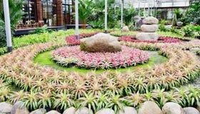Beautiful colorful foliage on bromeliad plant - bromeliad garden Royalty Free Stock Photography