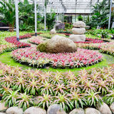 Beautiful colorful foliage on bromeliad plant - bromeliad garden Stock Images