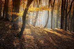 Beautiful colorful forest in autumn Royalty Free Stock Photography