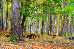 Beautiful colorful forest, and benches. Autumn forest, fallen leaves and resting benches Stock Photography