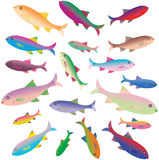 Beautiful colorful green  fishes Royalty Free Stock Photo