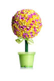 Beautiful colorful green potted topiary Royalty Free Stock Image