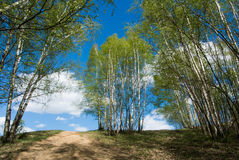 Beautiful colorful green summer landscape with a hill and young birches and a blue sky with clouds at the background. Abstract iconic russian image, Moscow Royalty Free Stock Image