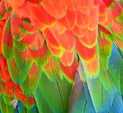 Beautiful colorful high detailed Macaw feathers Royalty Free Stock Photo