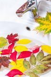 Beautiful colorful leaves float in ceramic washbasin Royalty Free Stock Image
