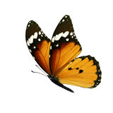 Monarch butterfly isolated. Beautiful colorful monarch butterfly isolated on white background Royalty Free Stock Image