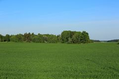 Free Beautiful Colorful Natural Landscape, Green Field And Trees On Blue Sky Background. Stock Photo - 117560680