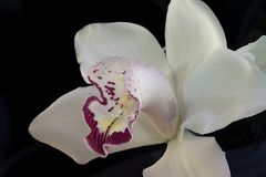 Beautiful colorful orchid close up Stock Photos