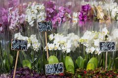 Beautiful colorful Orchid flowers in flower shop Royalty Free Stock Photo