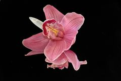 Beautiful colorful orchid on the mirror stock photo