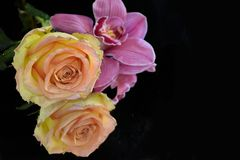 Beautiful colorful orchid with rose on the mirror royalty free stock photos