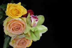 Beautiful colorful orchid with rose on the mirror stock photo