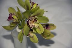 Beautiful colorful orchidea close up stock photography