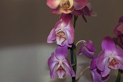 Beautiful colorful orchidea in my garden royalty free stock images