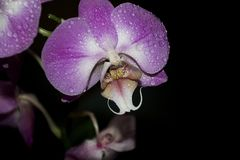Beautiful colorful orchids close up in the sunshine Royalty Free Stock Photography