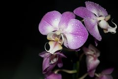 Beautiful colorful orchids close up in the sunshine Stock Photography