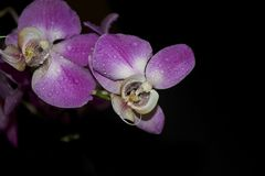 Beautiful colorful orchids close up in the sunshine Stock Photo