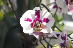 Beautiful colorful orchids close up in the window Stock Photo
