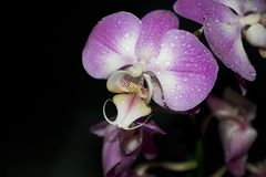 Beautiful colorful orchids close up in the sunshine Stock Image