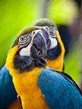 Beautiful colorful parrot Stock Images