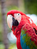 Beautiful colorful parrot stock photography
