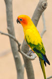 Beautiful colorful parrot Stock Photo