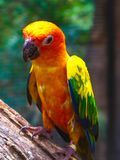 Beautiful colorful Parrot and Macaw bird  in the nature tropical  zoo stock photography