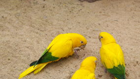 Beautiful colorful parrot stock video footage