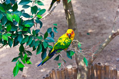Beautiful colorful parrot Royalty Free Stock Image