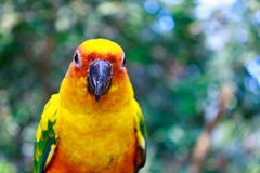 Beautiful colorful parrot Royalty Free Stock Images