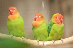 Beautiful colorful parrots in Loro Park in Puerto de la Cruz on Tenerife, Canary Islands Royalty Free Stock Photos