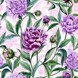 Beautiful colorful peony flowers with leaves, buds and pink outline on white background. Seamless floral pattern. Watercolor painting. Hand drawn illustration Stock Image