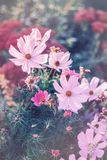 Beautiful colorful pink red purple flowers with green leaves on blurry background bokeh. Toned with filters and light leak. Soft selective focus. Macro closeup stock image