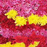 Beautiful colorful pink and yellow flowers background Royalty Free Stock Photo